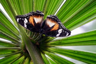 A black and orange butterfly sitting on a green leafy plant