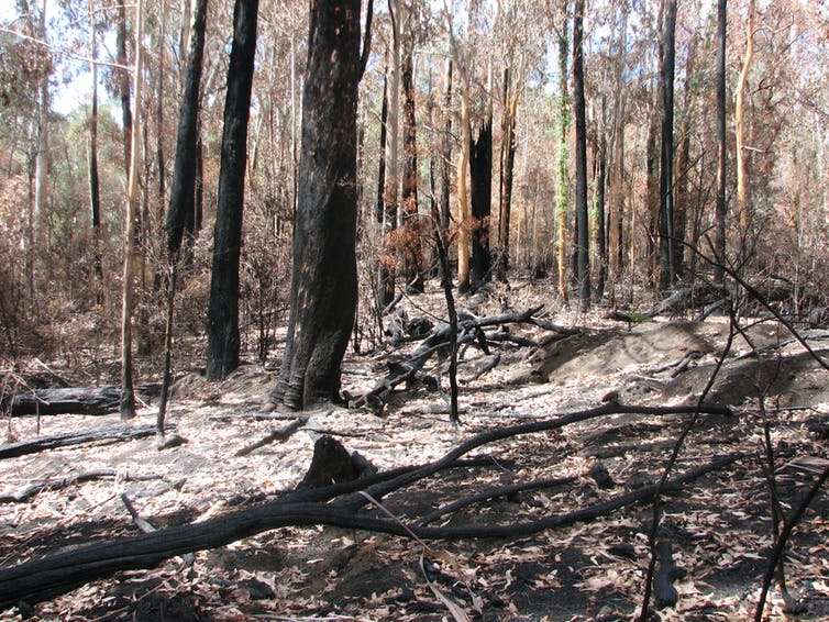 Burnt out bush and forest floor