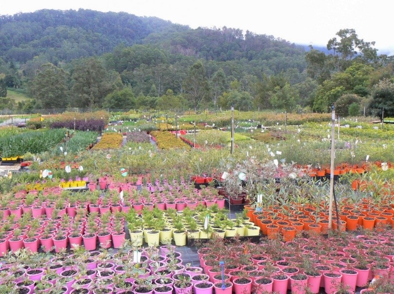 Talk to your nursery about what to plant after a bushfire
