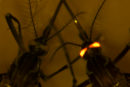 A close-up of two mosquitoes, with one's eyes glowing red.
