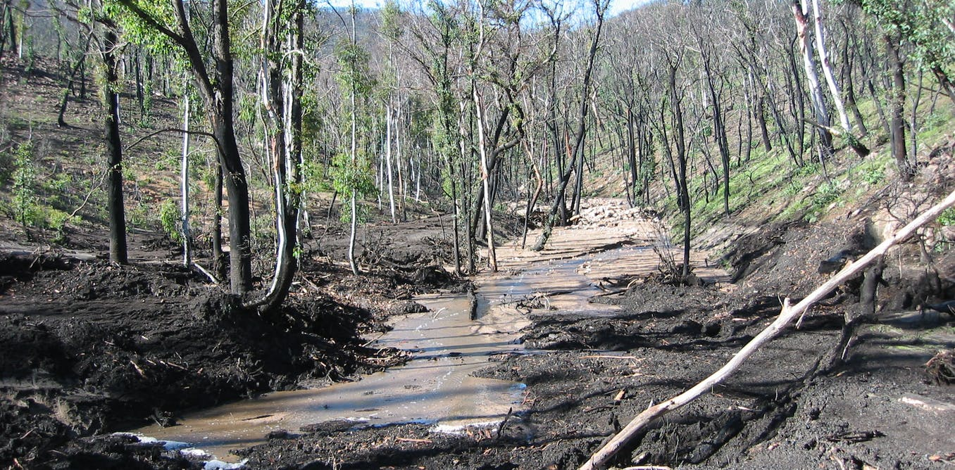 The sweet relief of rain after bushfires threatens disaster for our rivers - CSIROscope