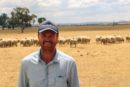 Man standing in front of sheep grazing