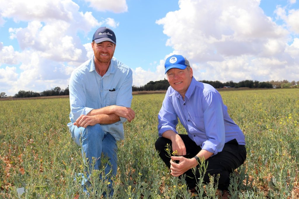 2 guys crouching in a field of canola