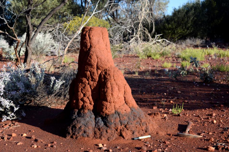 red termite mound showing blue metallic surface around base