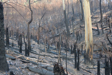 Image of burnt bushland can bring eco-grief.
