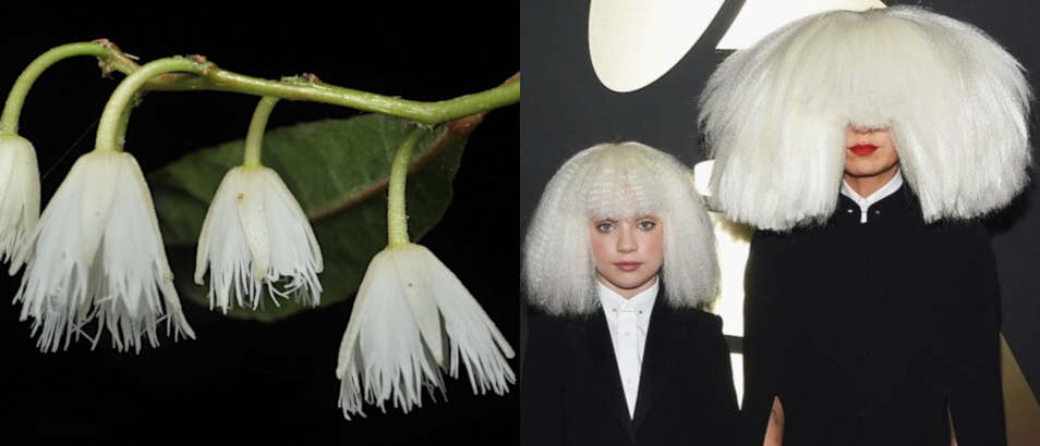 white bell flowers on the left, small girl and Sia on the right both with large white wigs