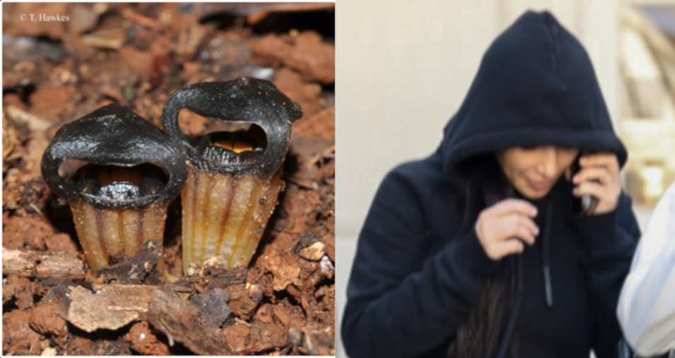 celebrity lookalike. black hooded flower on left and woman in black hoodie on the right