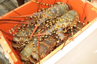 lobsters in an orange plastic box