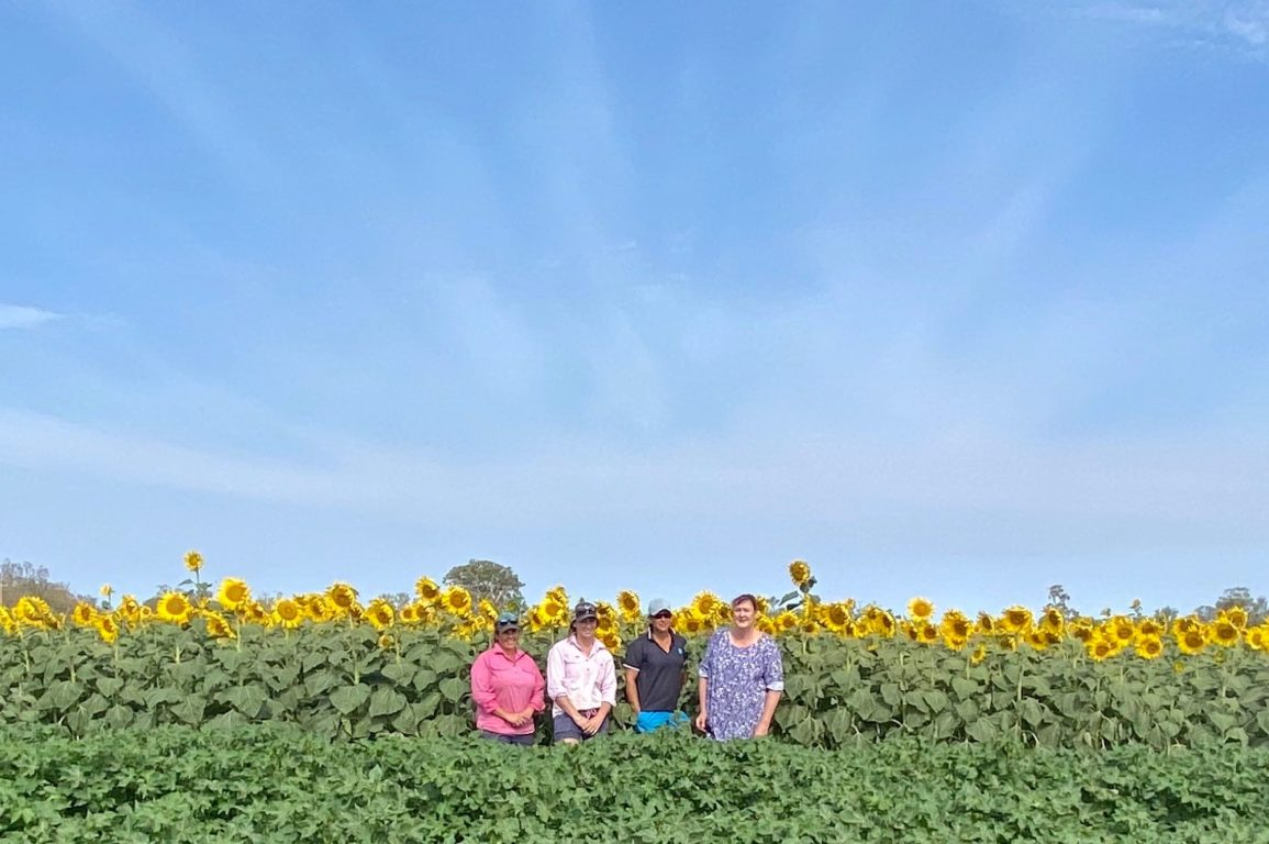 four women facing the camera standing in a cotton crop with sunflowers