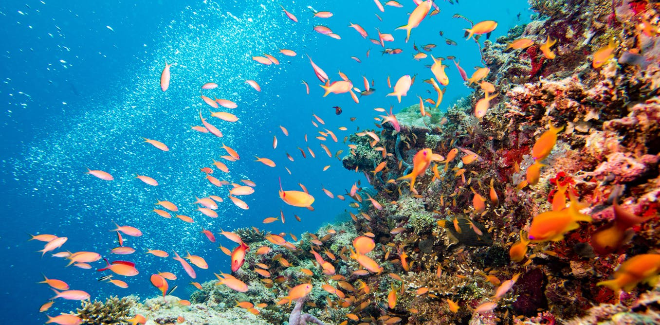 underwater photo of fish and coral