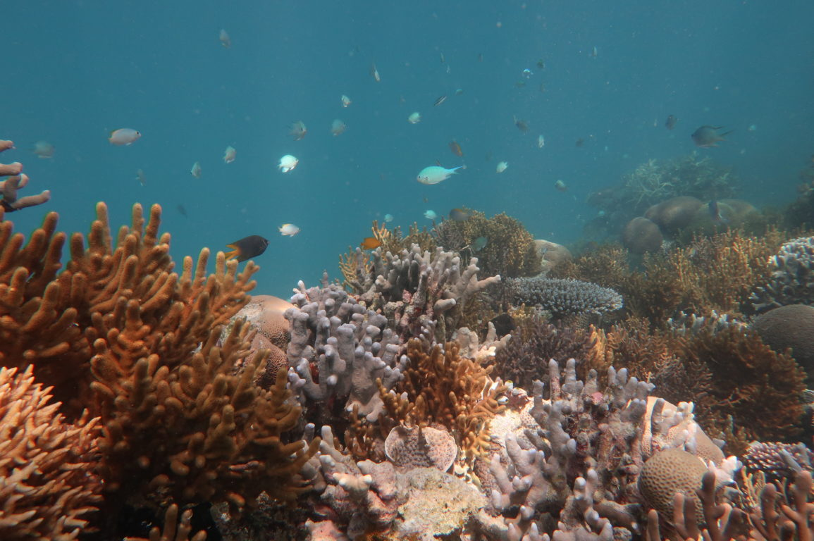 Photo showing corals and small to medium sized fishes swimming.