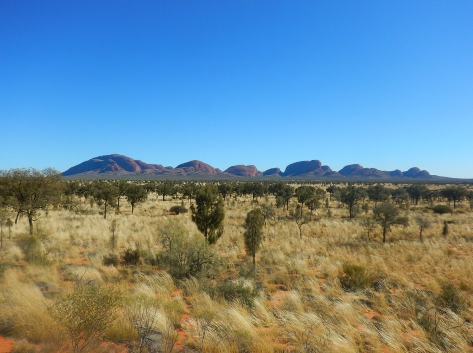blue sky, mountains in the background, red earth, yellow tussocks