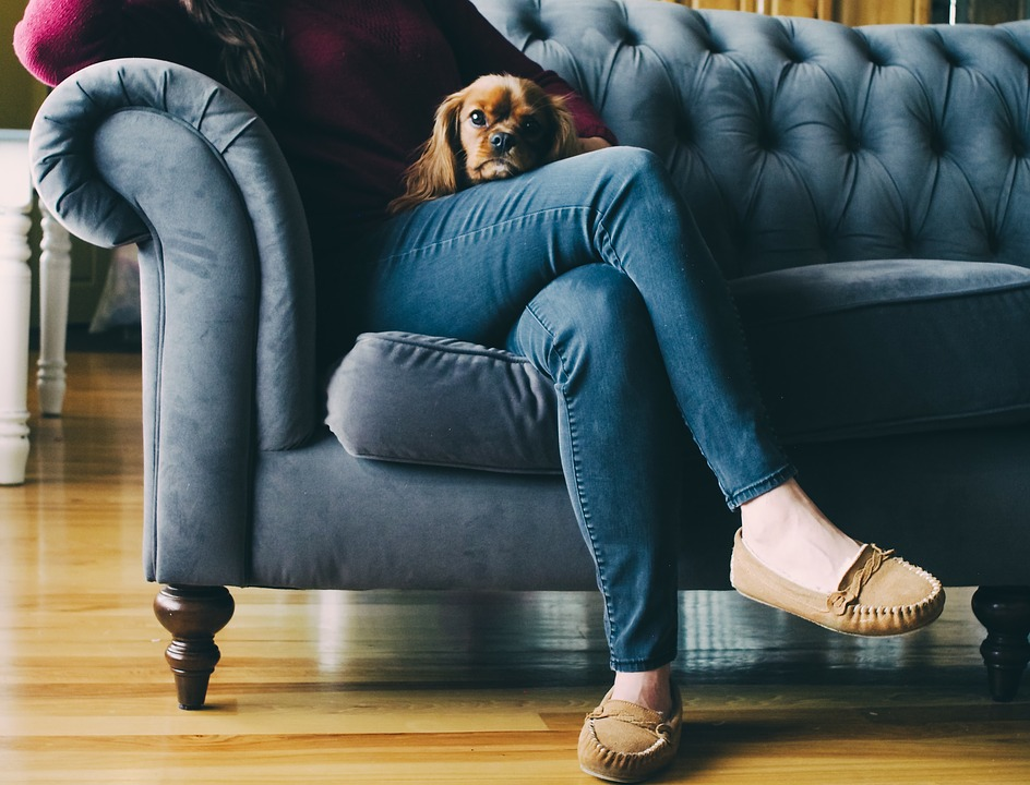 person sitting on a couch with a dog on lap