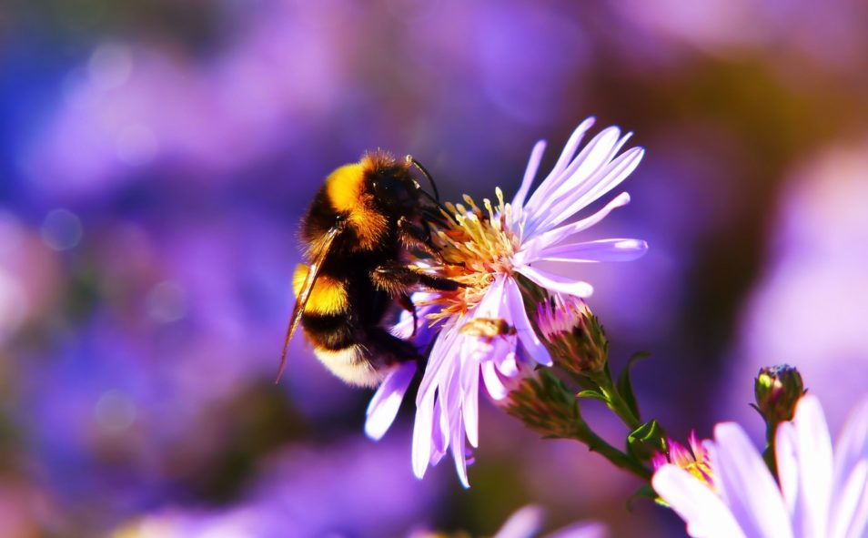 bumble bee on a flower science quiz