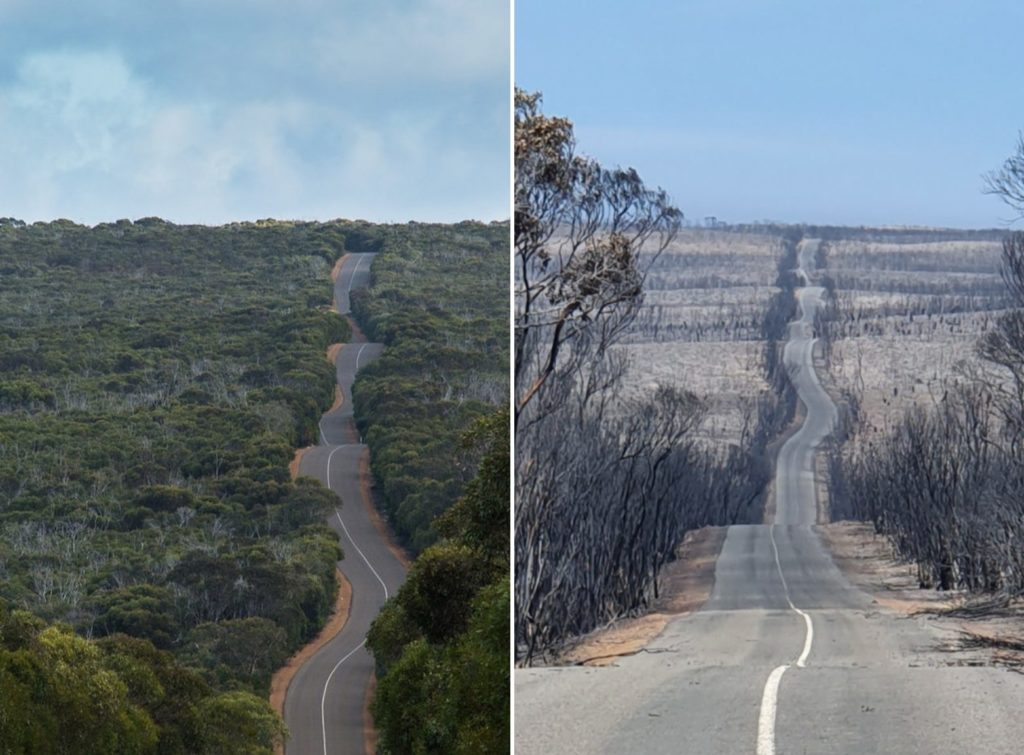 Before and after pictures of the road through Flinders Chase National Park reveal the effects of the bushfires.