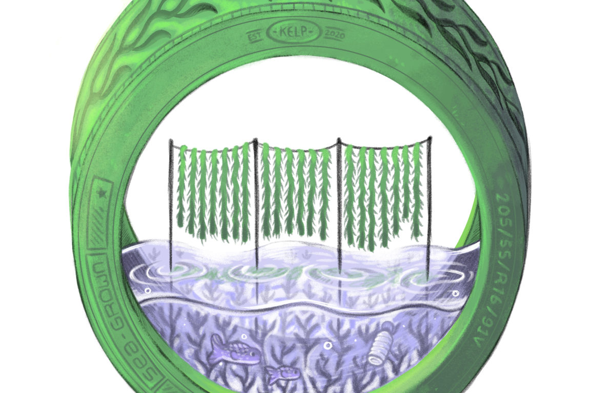 Could seaweed tyres be an effective substitute for synthetic rubber in tyres? Jessica from Victoria thinks so.