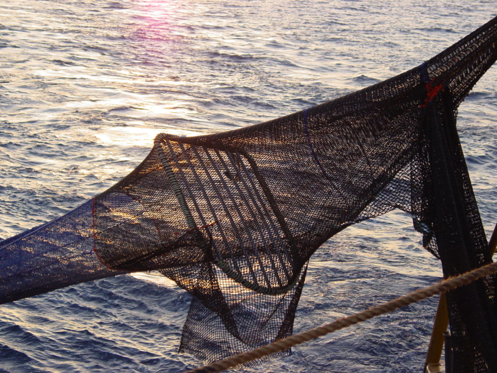 Turtle Excluder Device (TED) installed in a fishing net. Photo: Australian Fisheries Management Authority.