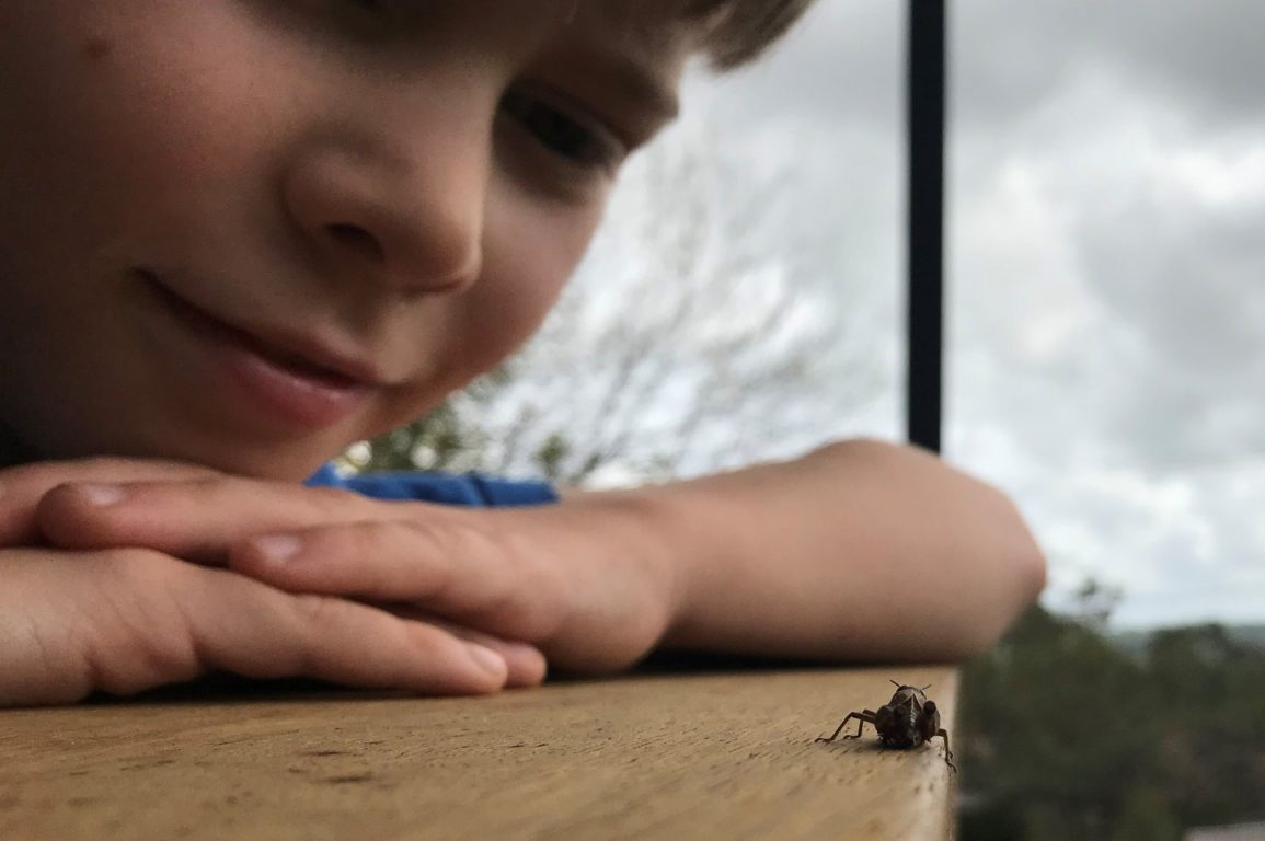 A small boy looking at a cricket on wood