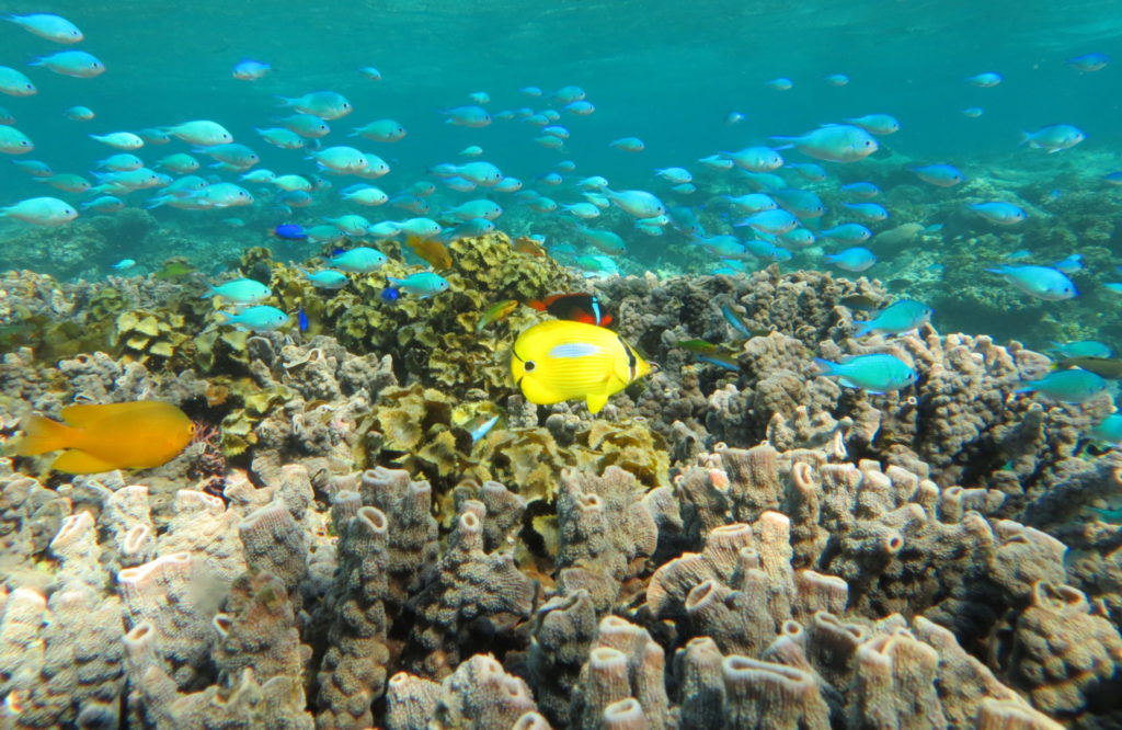 Great Barrier Reef coral and fish swimming in the water.