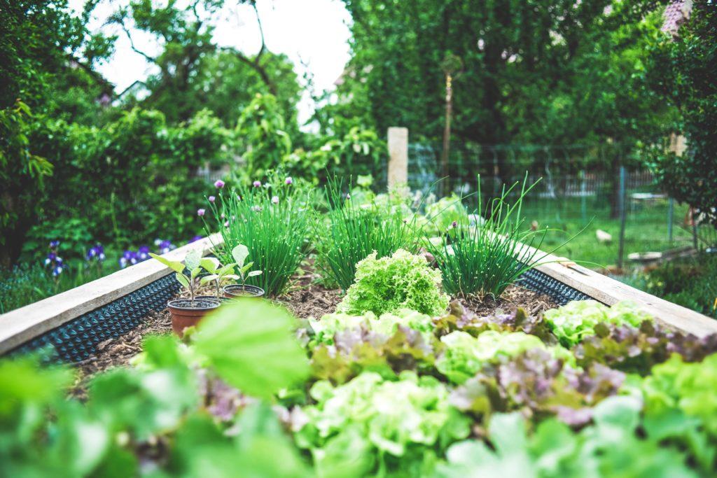 a backyard vegetable garden