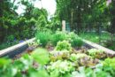 a backyard vegetable garden