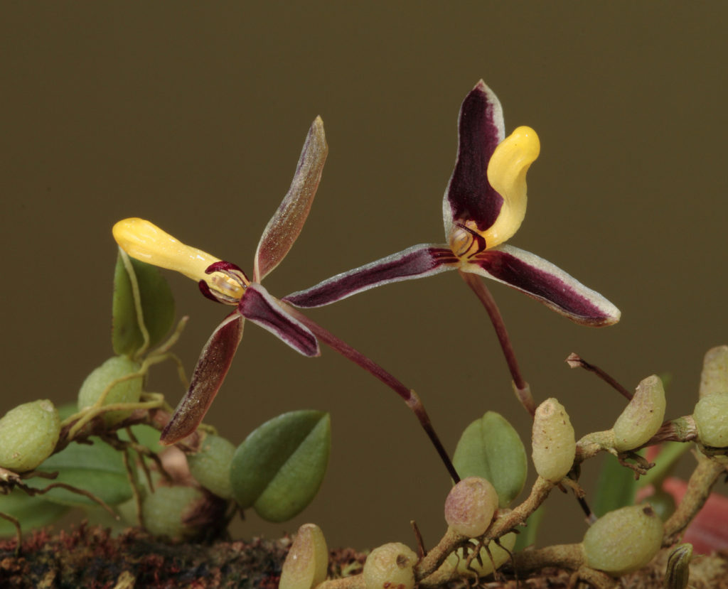 special flora in New Guinea.