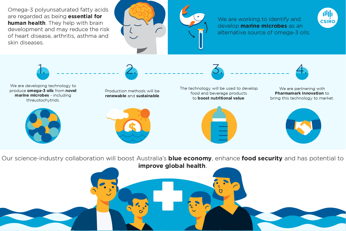 Infographic of the process of developing marine-sourced omega-3 oils