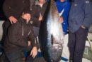 Five men with record tuna fish