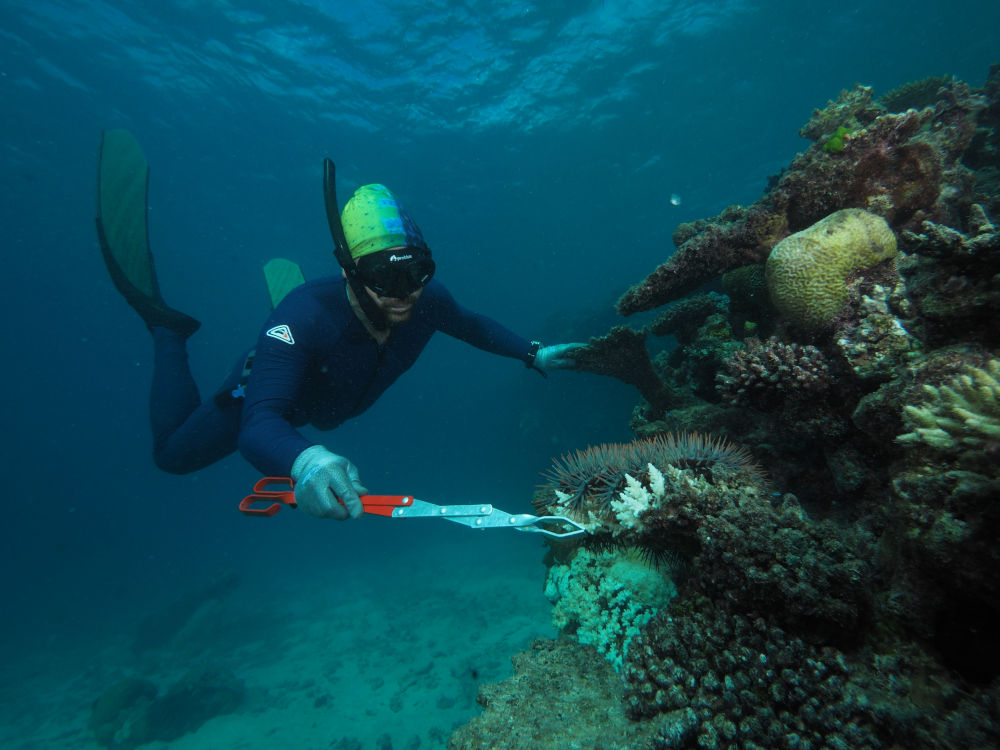 a scubadiver collecting a starfish with tong-like instrument underwater