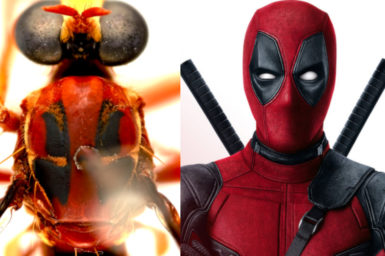 black and red wasp next to deadpool character