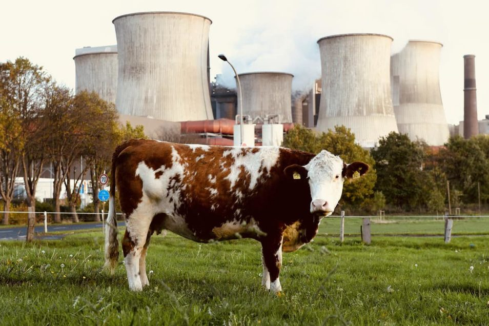 Cow standing in front of industrial station