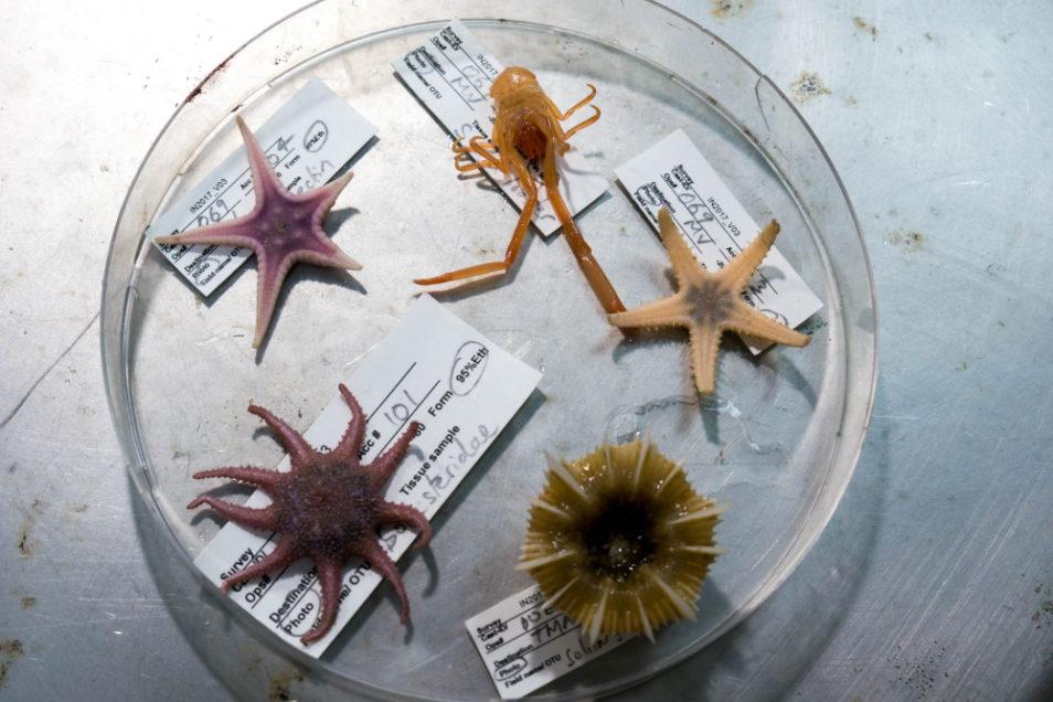 specimens in a perti dish