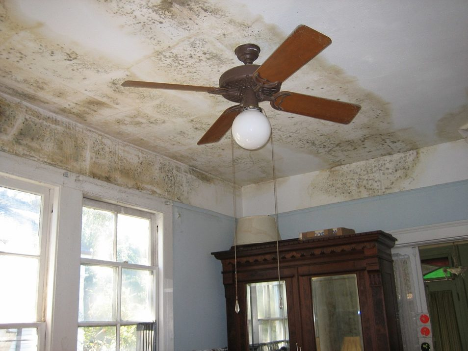 Mould on the ceiling of a house.