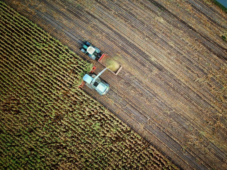Aerial view of crops and a tractor