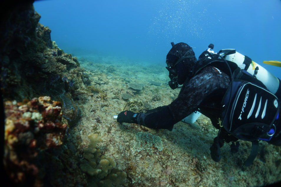 Diver on the shallow reef of Ningaloo