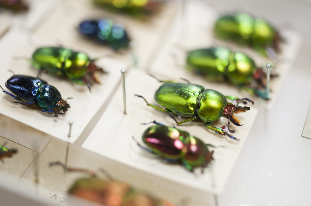 The national insect collection as part of the biodiversity database.