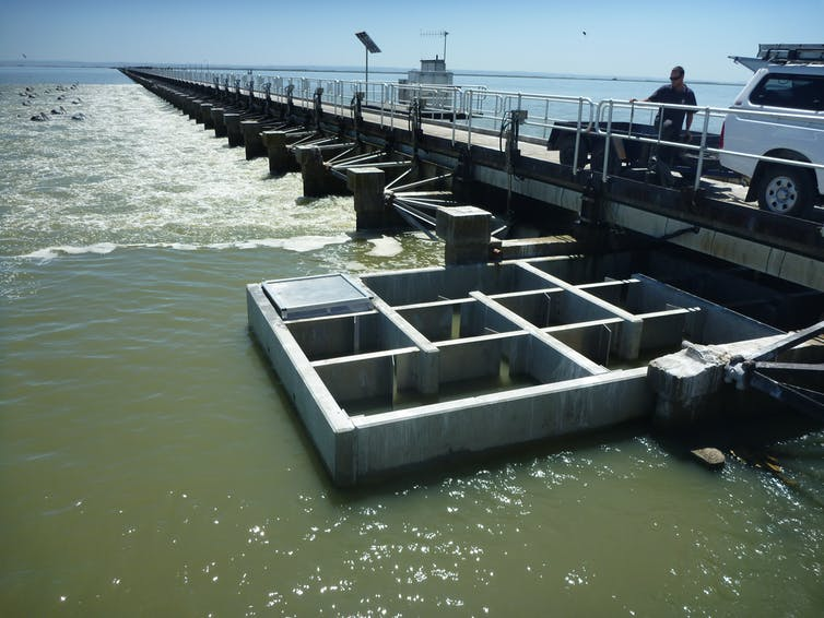 A fish ladder on the Murray Barrages. Fish swim through this structure to move from the estuary. into the freshwater lakes and River Murray. Without fish ladders, fish are seldom able to move past the barrages.