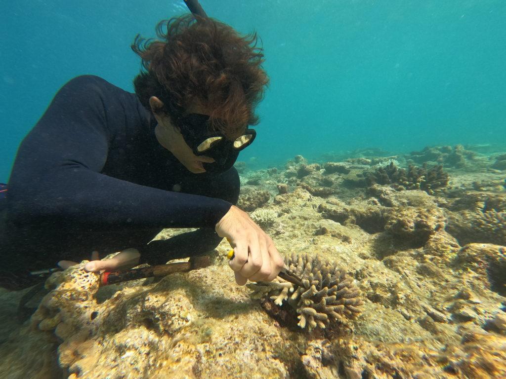 Coral spawn and scientist underwater