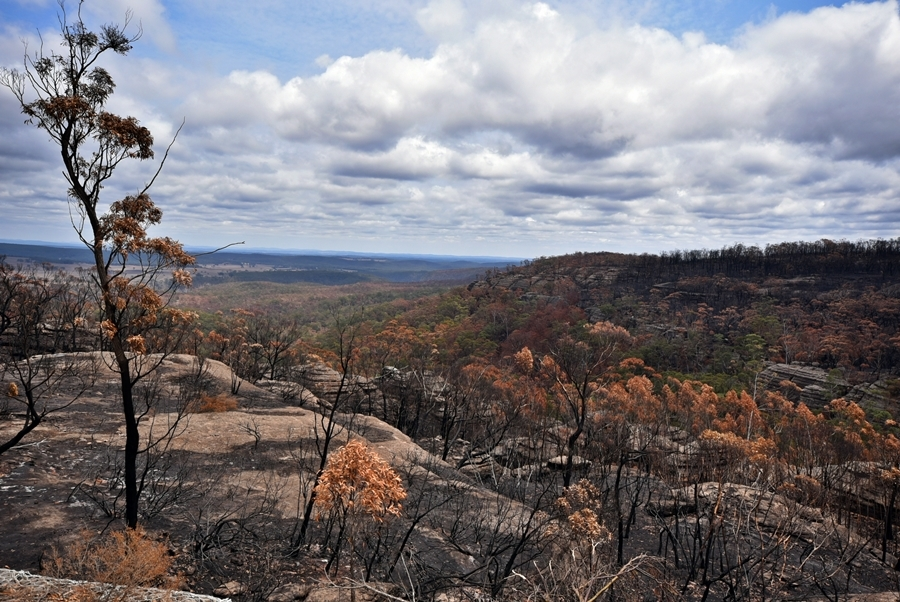 Bushfire affected landscape