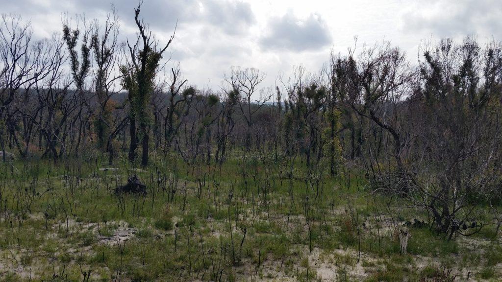burnt landscape after bushfire