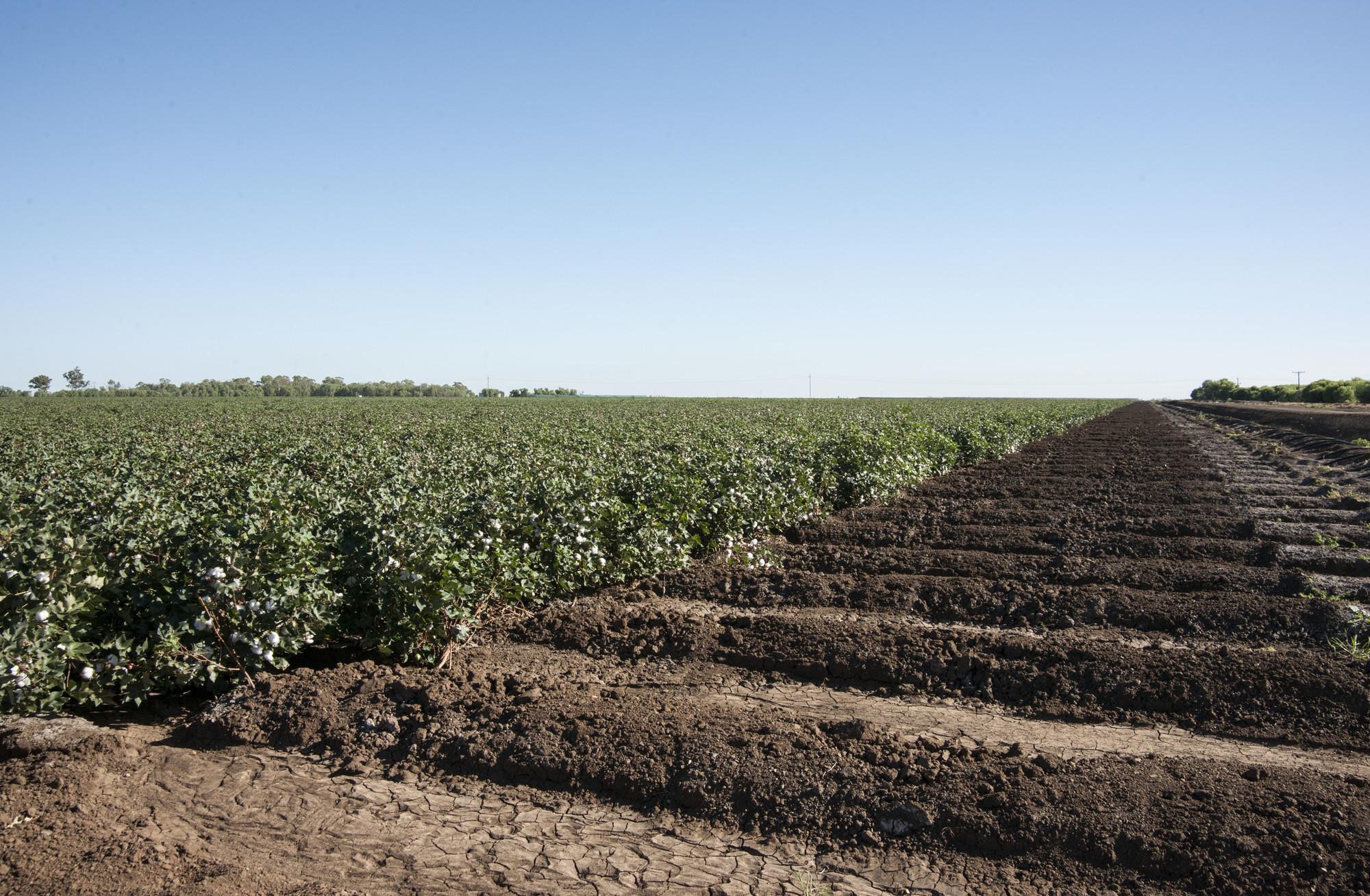 Photo of an irrigated farm field