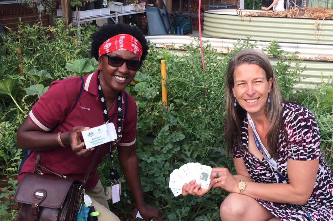Carol and Kate holding a pack of the plant pest playing cards that they designed with the students. Part of their teacher and entomologist classroom collaboration