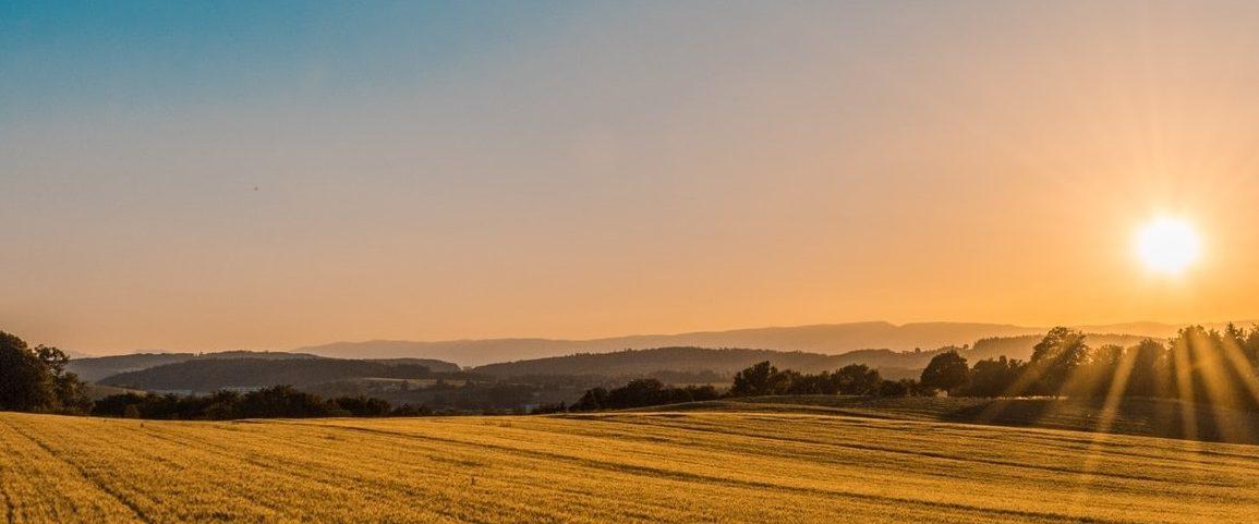 Sunrise over an open field