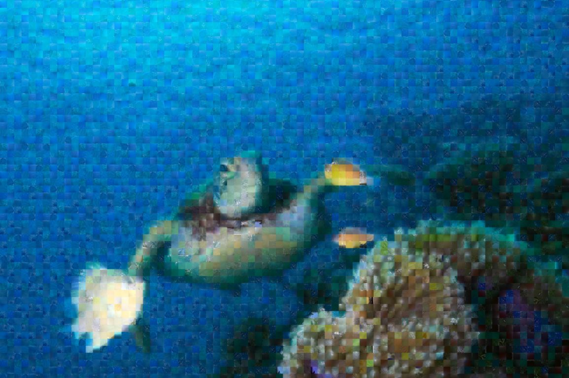 Image of a green turtle swimming underwater. The image mosaic was created using images from the EyeonWater Australia app.