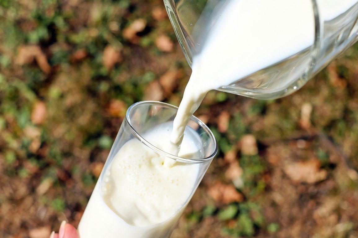 animal-free dairy, milk