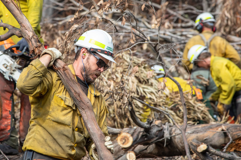 Emergency workers clearing fallen trees after a fire