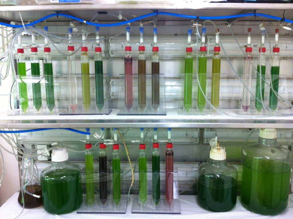 Test tubes and bottles in a rack with green liquids. Helping to grow space food.