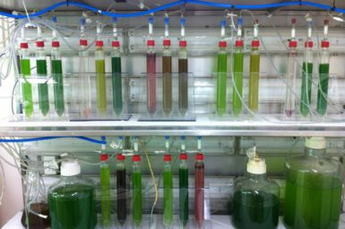 Test tubes and bottles show green microalgae helping create space food in a rack with liquids.