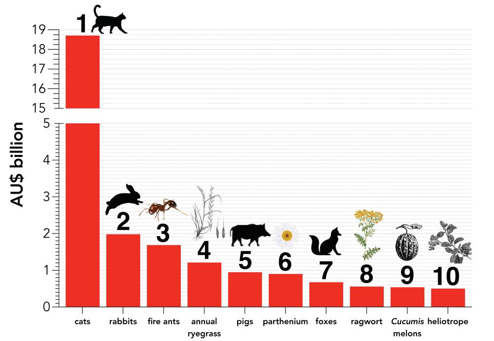 Graph showing the 10 costliest invasive species in Australia.