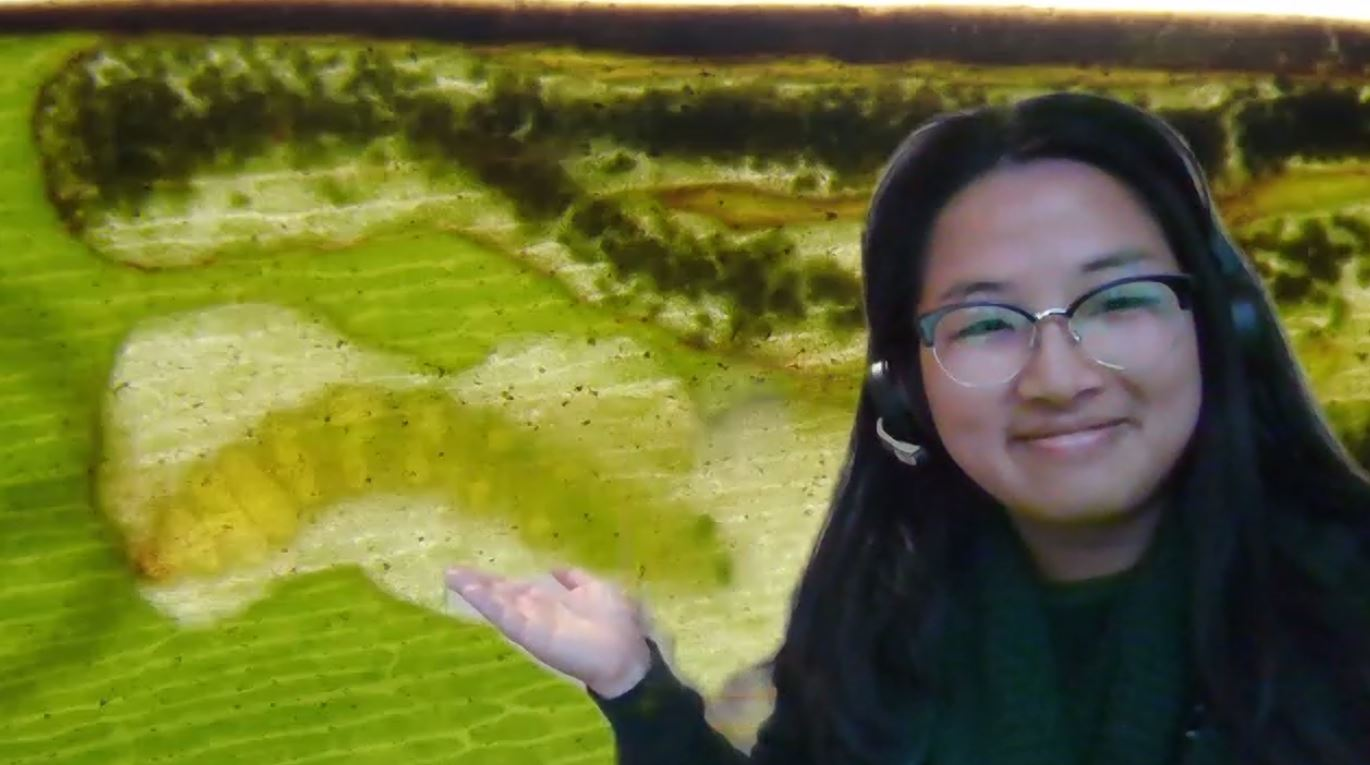 A woman wearing glasses in front of a green background with an insect in a leaf
